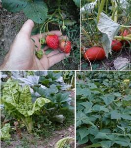 jardinage production diversifiee