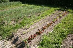 Atelier de formation au jardinage biologique par Les Potagers Essaimés