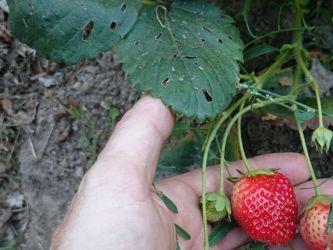 Production diversifiée de fruits et légumes
