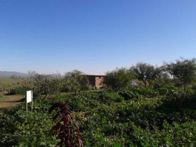 Jardinage bénévole Maroc